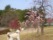 2008_03_12_pun.jpg