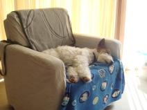 2008_03_15_sofa.jpg