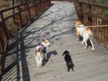 2008_03_18_walk2.jpg
