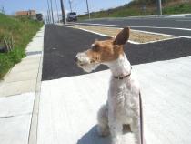 2008_04_11_road.jpg