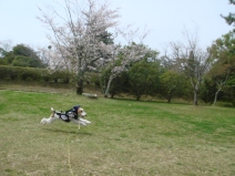 2008_04_12_run.jpg