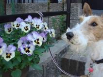 2008_04_21_flower.jpg