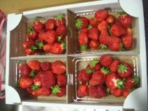 2008_05_17_berry.jpg