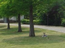 2008_05_23_kage.jpg