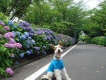 2008_06_14_flower.jpg