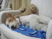 2008_06_22_sleep.jpg