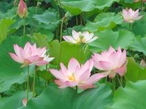 2008_07_16_flower.jpg