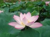 2008_07_16_flower3.jpg