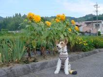 2008_07_21_flower.jpg