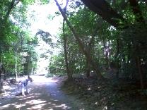 2008_07_23_green.jpg