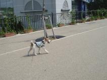 2008_08_01_walk1.jpg