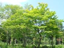 2008_08_12_green.jpg