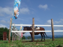 2008_08_12_horse.jpg