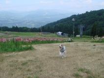 2008_08_12_run.jpg