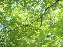 2008_10_30_green.jpg