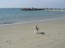 2008_11_02_run2.jpg