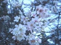 2008_11_13_sakura.jpg