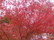 2008_11_17_red.jpg
