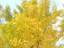 2008_11_17_yellow.jpg