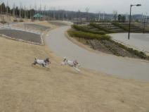 2009_03_09_run.jpg