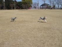 2009_03_12_run2.jpg