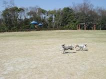 2009_03_24_run.jpg