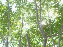 2009_03_29_green.jpg