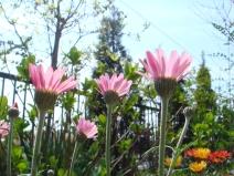 2009_03_29_pink.jpg