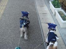 2009_04_12_walk.jpg