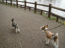 2009_05_08_walk.jpg