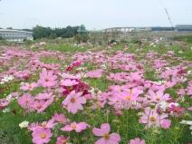 2009_10_05_flower2.jpg