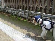 2008_04_12_walk.jpg