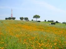 2008_09_11_flower.jpg