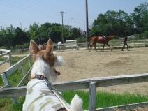 2008_09_11_horse.jpg