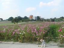 2008_10_21_flower.jpg