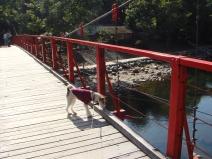 2008_10_30_bridge2.jpg