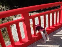 2008_10_30_red3.jpg