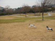 2009_01_22_run.jpg
