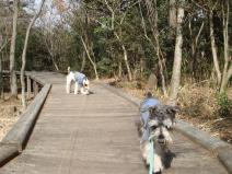 2009_02_11_walk.jpg