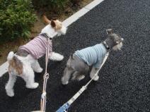 2009_02_25_walk.jpg