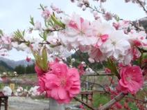 2009_04_27_flower.jpg