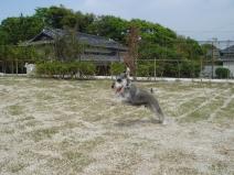 2009_05_10_jump.jpg